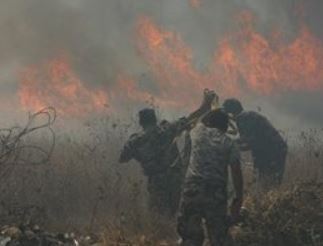 """Israeli"" Soldiers Injure At Least 25 Palestinians, Settlers Burn 350 Olive Trees"