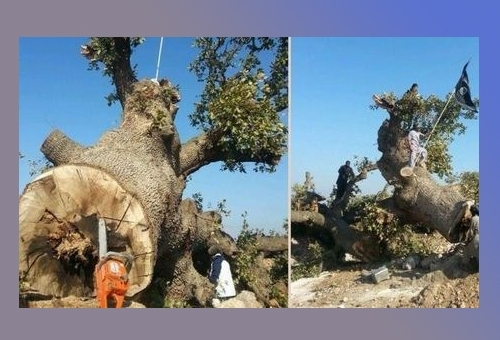 Insurgents Cut Down 150-Year Old Tree for Being 'Worshipped'