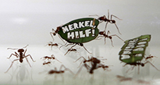 Half a Million Ants March in Germany