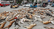 Thousand Dogs Poisoned to Death in Pakistan's Karachi!