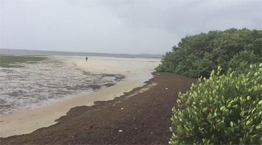Irma: Hurricane Sucks Sea from Florida Beach