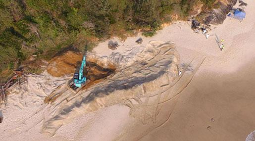 Whale Carcass Dug Up from Australian Beach over Shark Fears