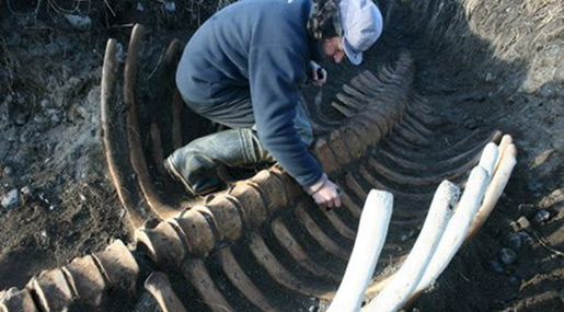 Giant Skeleton Washes Ashore in Russia's Far East