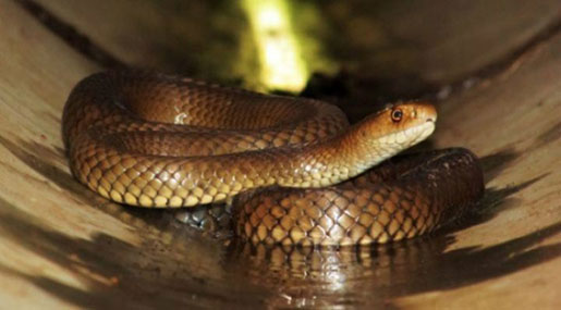 Man Dies Trying To Protect Dog from Venomous Snake