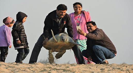 Indian Coast Witnesses Record Nesting by Endangered Sea Turtles