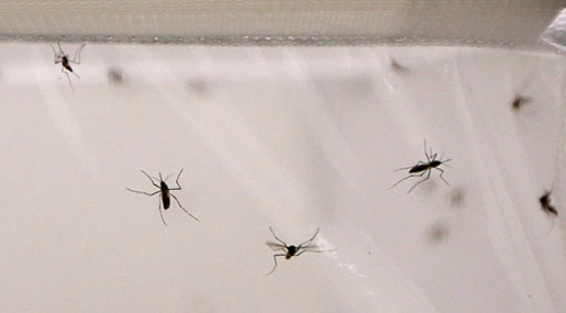 Experts Fear Malaria's Resurgence