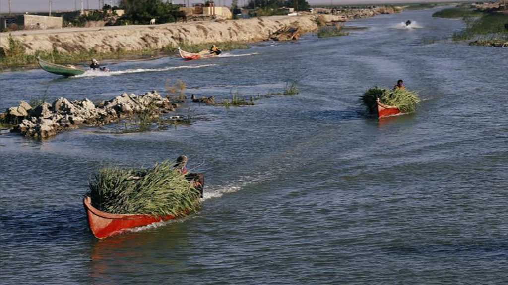 Unexpected Rainfall Revives Iraq's Historic Marshlands