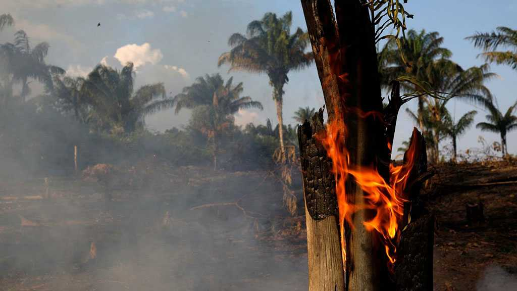 Amazon Wildfires: Brazil, France Clash over Burning Rainforest