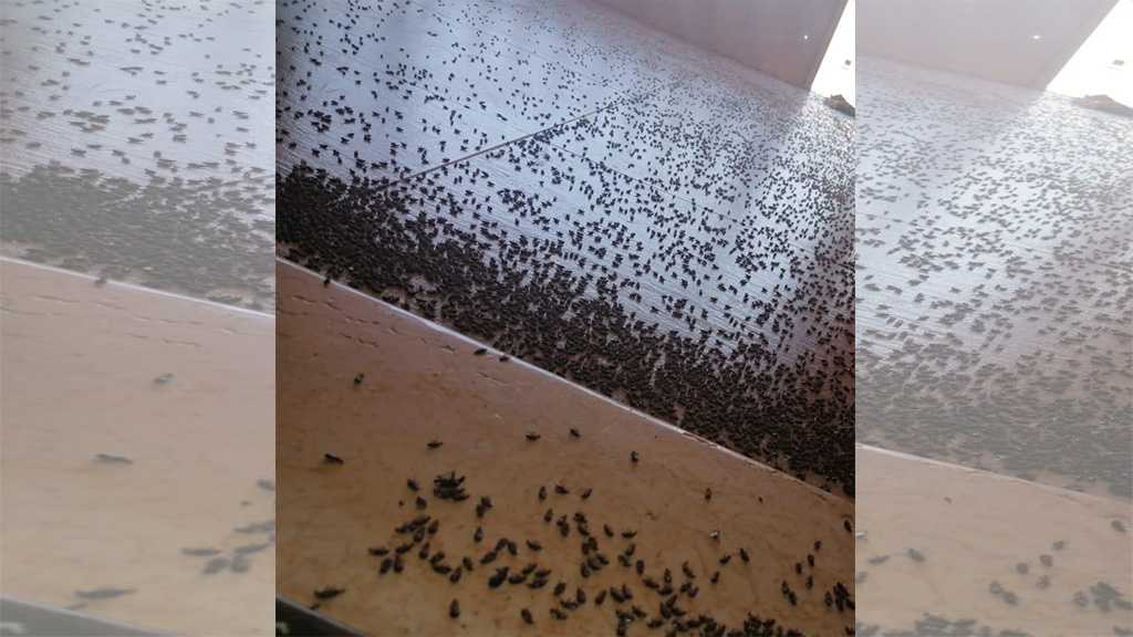 Swarms of Insects Invade Several Lebanese Regions