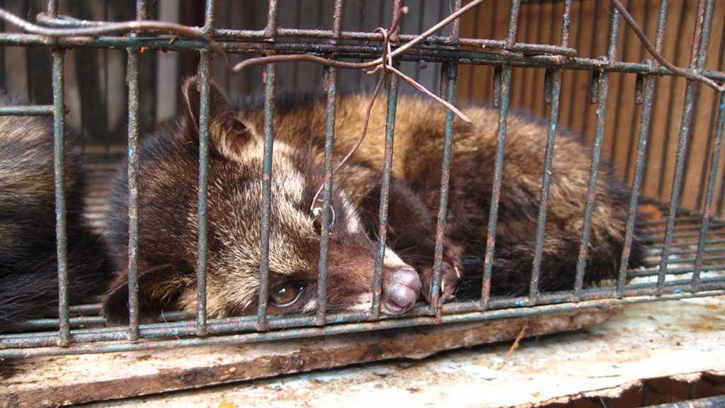 Wuhan Imposes Blanket Ban on Wildlife Trade, Consumption to 'Safeguard Public Health'