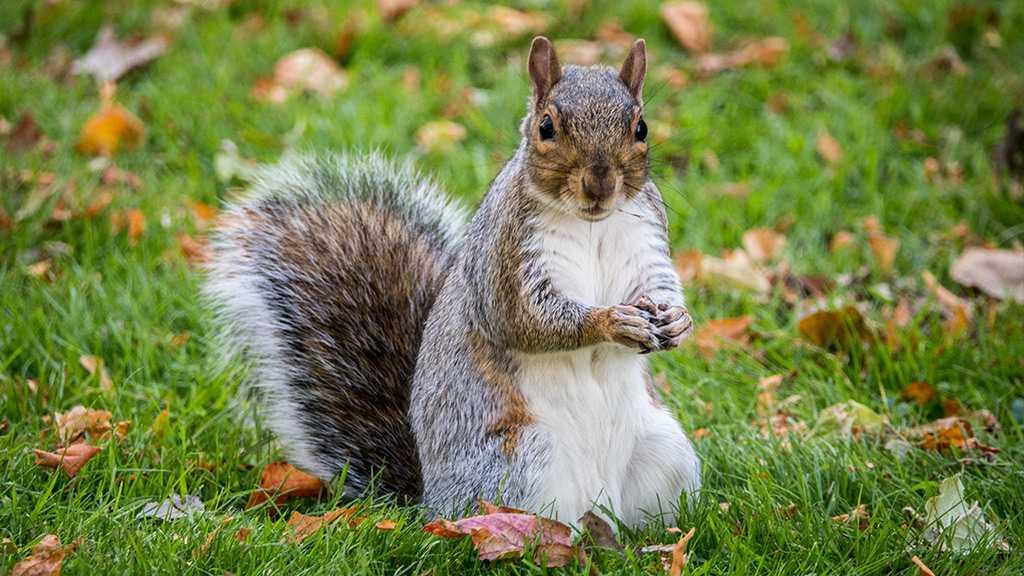 Squirrel Contracts Bubonic Plague in Colorado