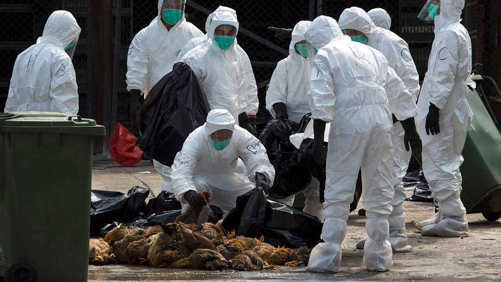S Korea Culled Nearly 22Mln Farm Birds in 2 Months Due to Bird Flu