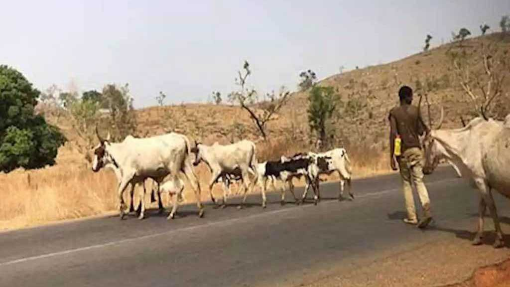 35 Dead in Chad Herder-farmer Clashes