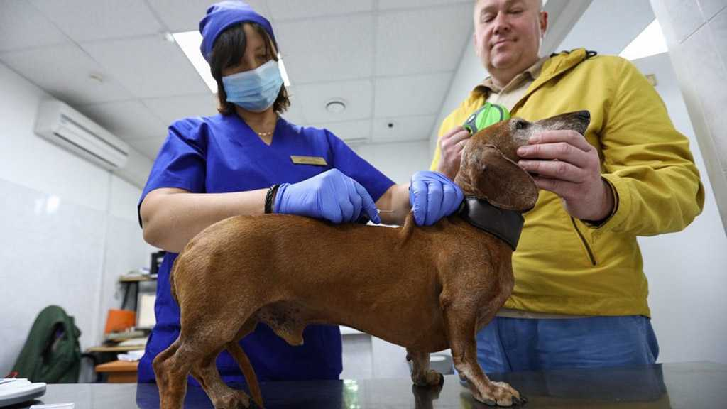 Russia's Sputnik V Vaccine May Also Effectively Protect Animals from COVID-19