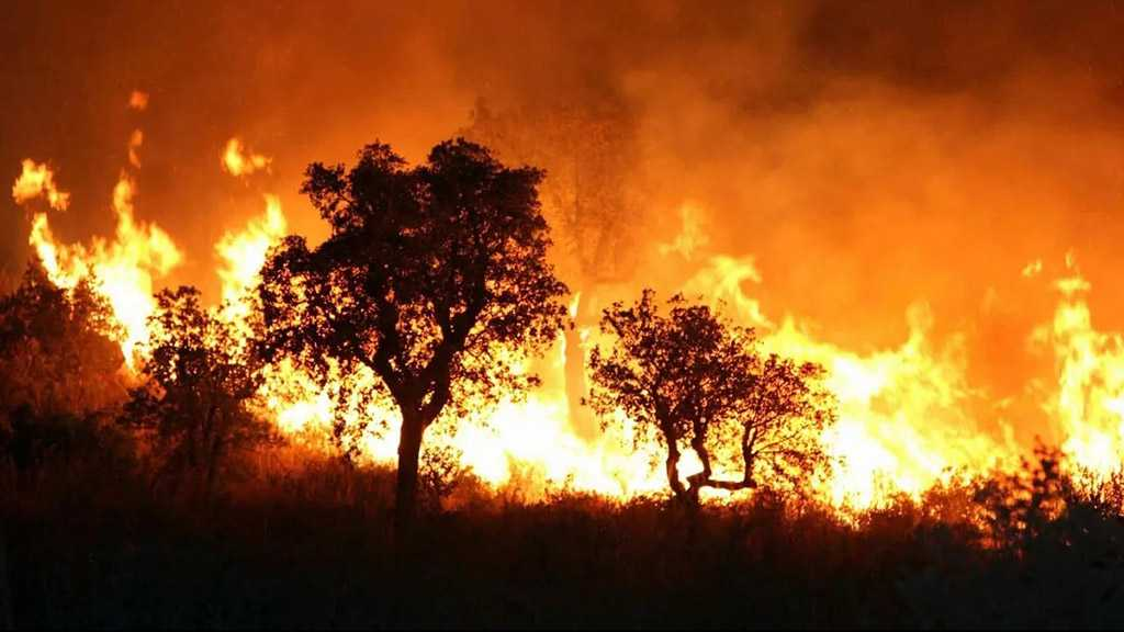 Algeria Blames Forest Fires on Arson, Death Toll Rises to Six