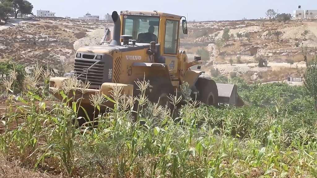 'Israeli' Forces Raze Agricultural Land East of Al-Khalil