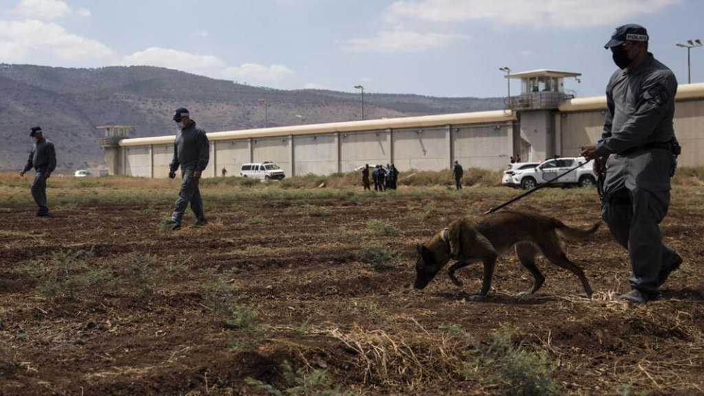"""Israel"" in Chaos after Heroic Prison Break by Palestinians"